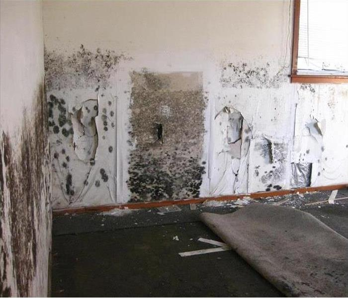 Mold Remediation Prevention of Mold Issues