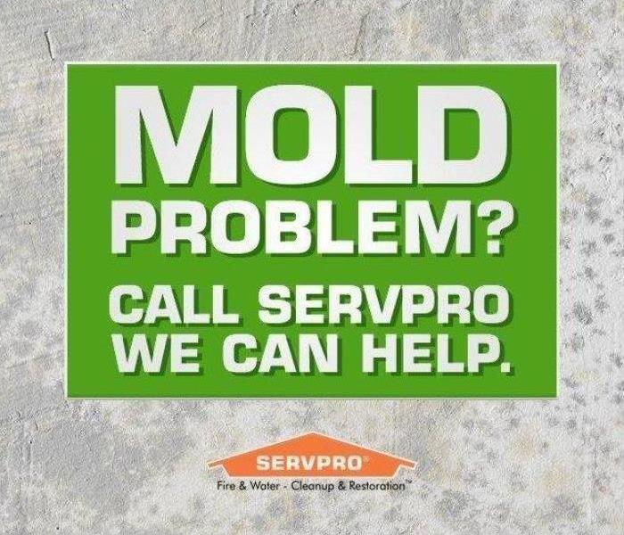 Mold Remediation How to Prevent Mold